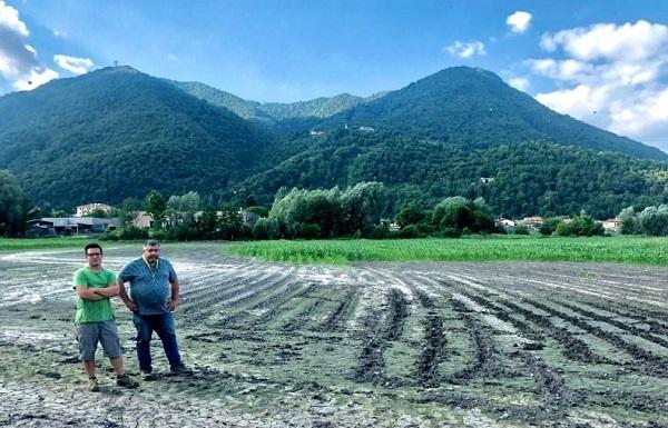 coldiretti varesotto cinghiali agricoltura