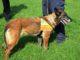 Gallarate cane esche avvelenate