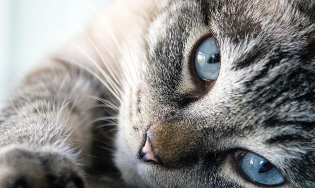 busto ricovero abusivo gatti