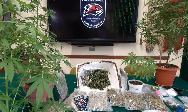 legnano pusher arrestato marijuana