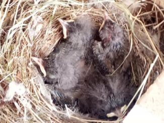 samarate nido brico