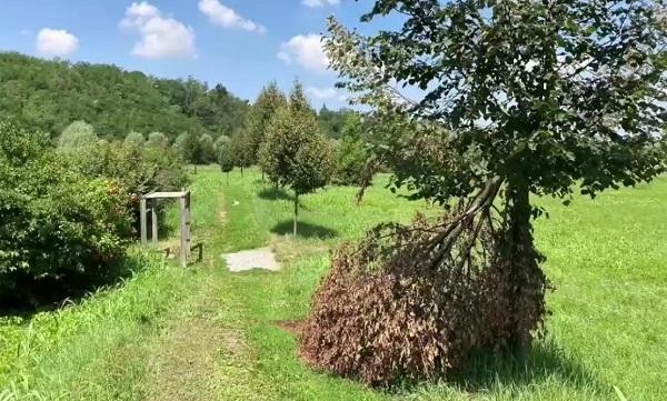 gorla maggiore parco valle