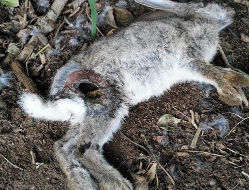 parco altomilanese conigli uccisi rifiuti