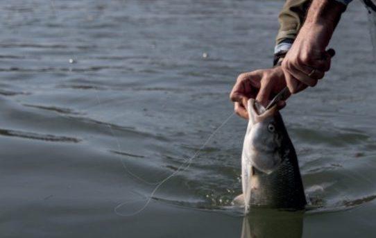 varese lago pescatori frodo