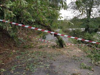 golasecca cade albero alzaia