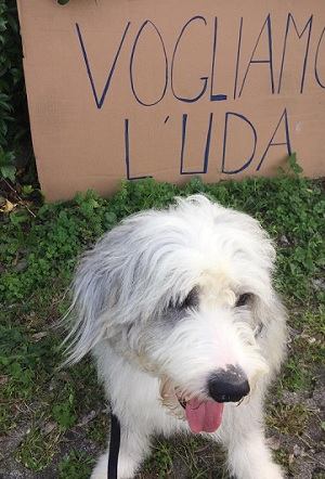 legnano campagna legalita animali pd