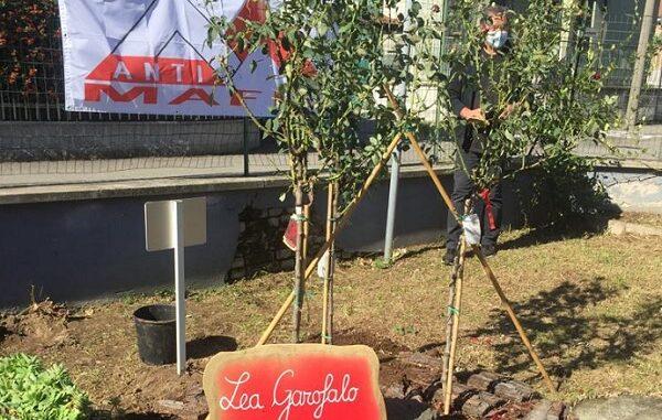 canegrate roseto garofalo mafie