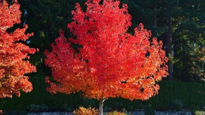 vanzaghello giornata alberi pianta