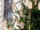 gallarate albero nuovi nati