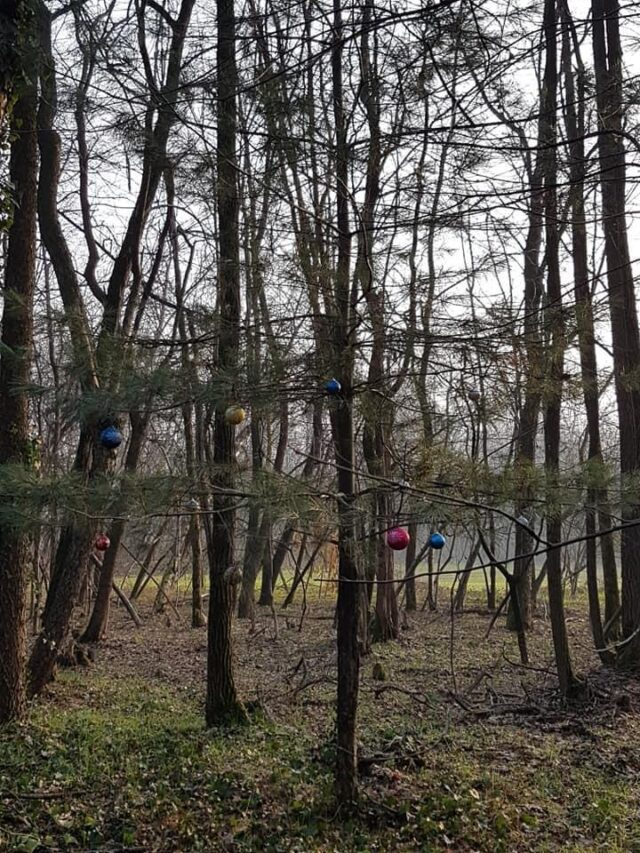 samarate presepe addobbi bosco