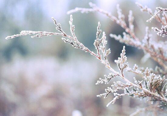variabile calo temperatura gelate