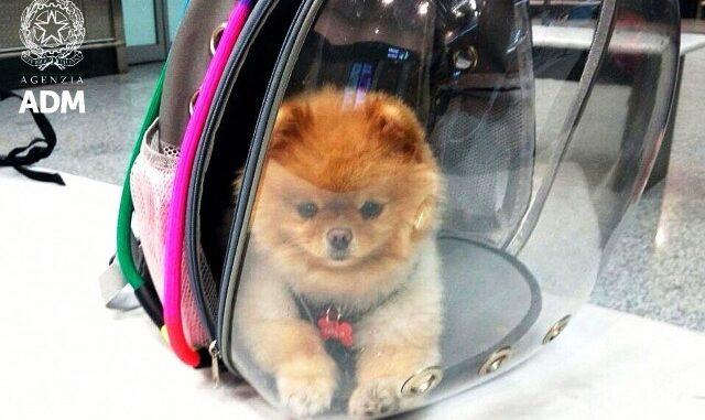 malpensa aereo animali domestici