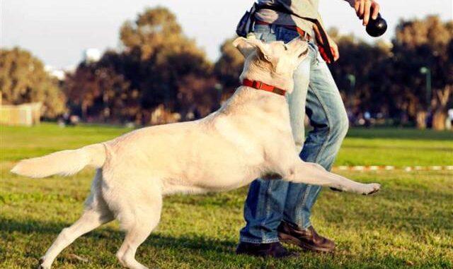 albizzate cani centro cinofilo