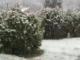 varese neve marzo primavera