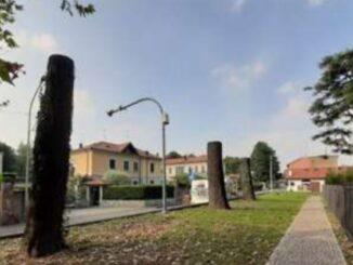 olgiate olona alberi sculture