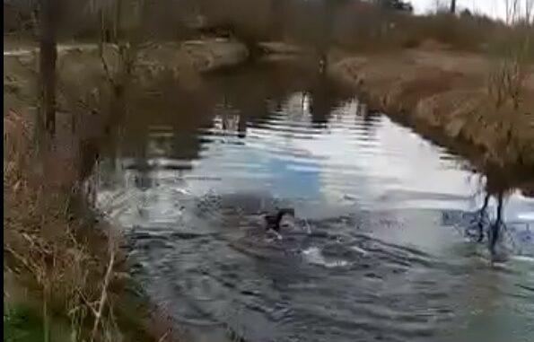 olgiateolona nuoto fiume olona
