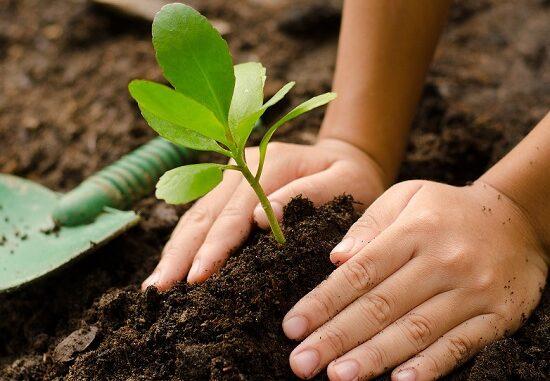 varese alberi green school