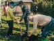 gallarate piante ambiente cassani silvestrini