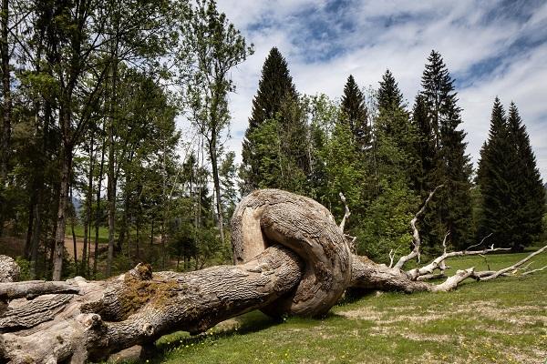 bruno concerto tree ticket