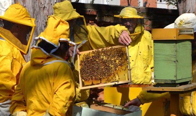 varese alveari urbani apicoltori