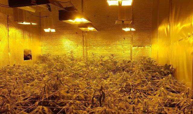 solbiate arno marijuana