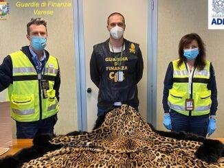 malpensa sequestro pelliccia giaguaro