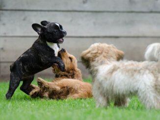 vanzaghello parco cani lavori