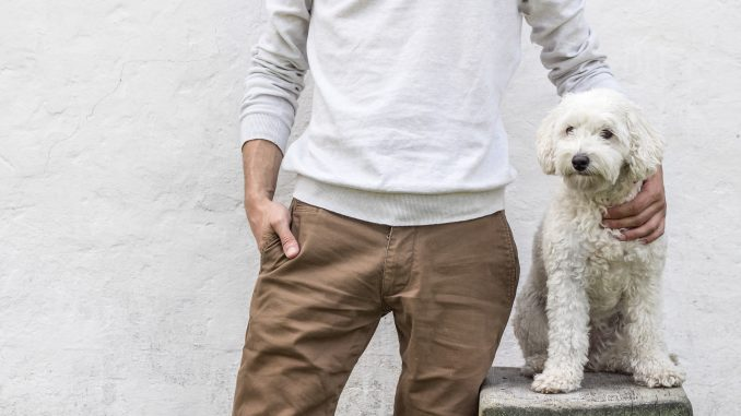 patentino cani Varese
