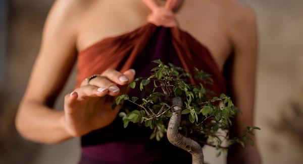 castellanza amici bonsai mostra