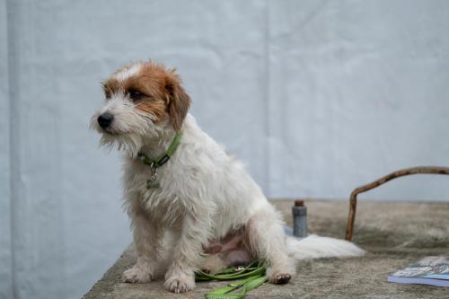giogara374536-Insubria winner - cani a malpensa fiere