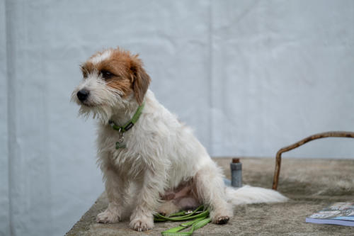 I cani più belli a Busto