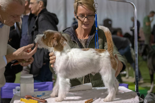 giogara374543-Insubria winner - cani a malpensa fiere