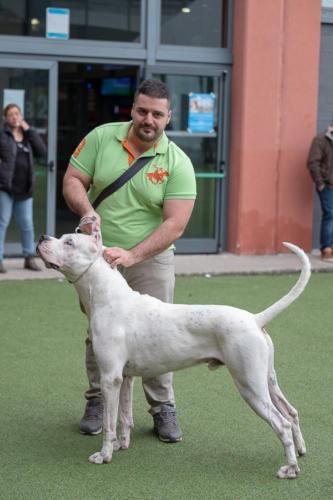 giogara374553-Insubria winner - cani a malpensa fiere