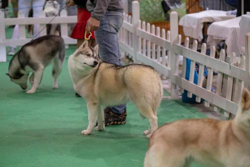 giogara374570-Insubria winner - cani a malpensa fiere