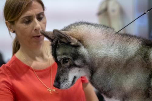 giogara374573-Insubria winner - cani a malpensa fiere