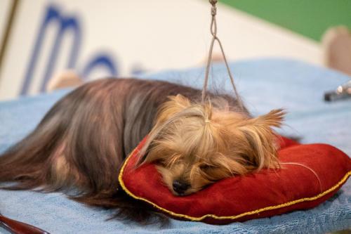 giogara374604-Insubria winner - cani a malpensa fiere