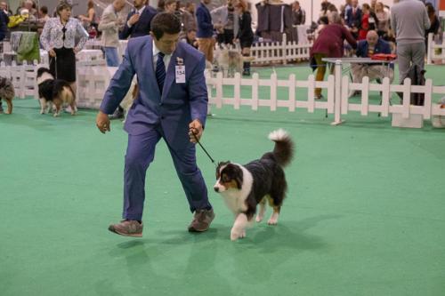giogara374621-Insubria winner - cani a malpensa fiere