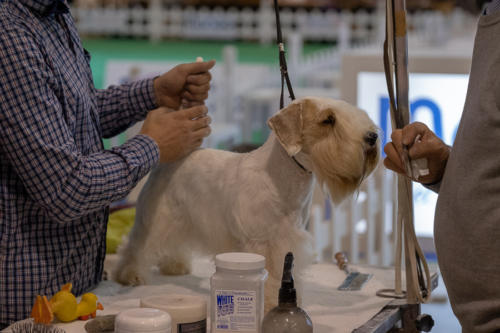 giogara374625-Insubria winner - cani a malpensa fiere
