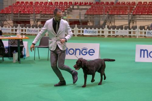 giogara374630-Insubria winner - cani a malpensa fiere
