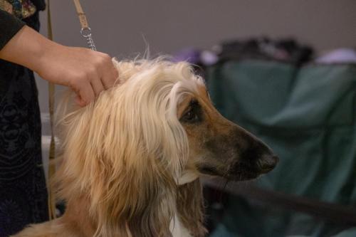 giogara374648-Insubria winner - cani a malpensa fiere