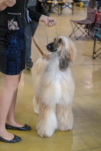 giogara374654-Insubria winner - cani a malpensa fiere