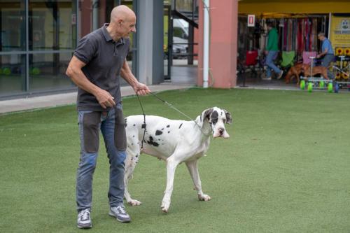 giogara374661-Insubria winner - cani a malpensa fiere