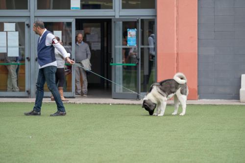 giogara374669-Insubria winner - cani a malpensa fiere